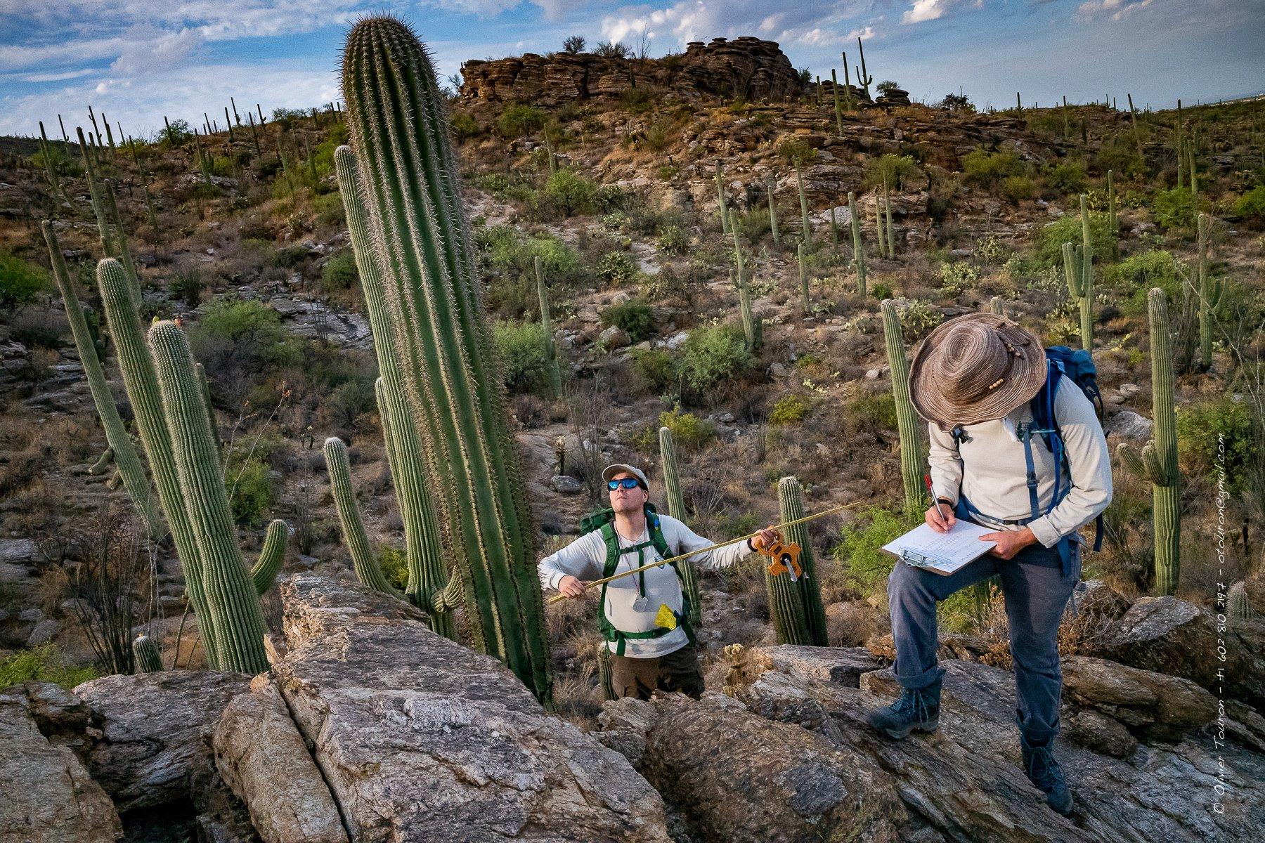 11 juillet 2019. Tucson, Arizona. Saguaro National Park. Lucas Etherington, bio tech, et son équipe sont filmés pour la communication d'une campagne de comptage des Saguaros pour en mesurer l'évolution. // © Olivier Touron / Divergence
