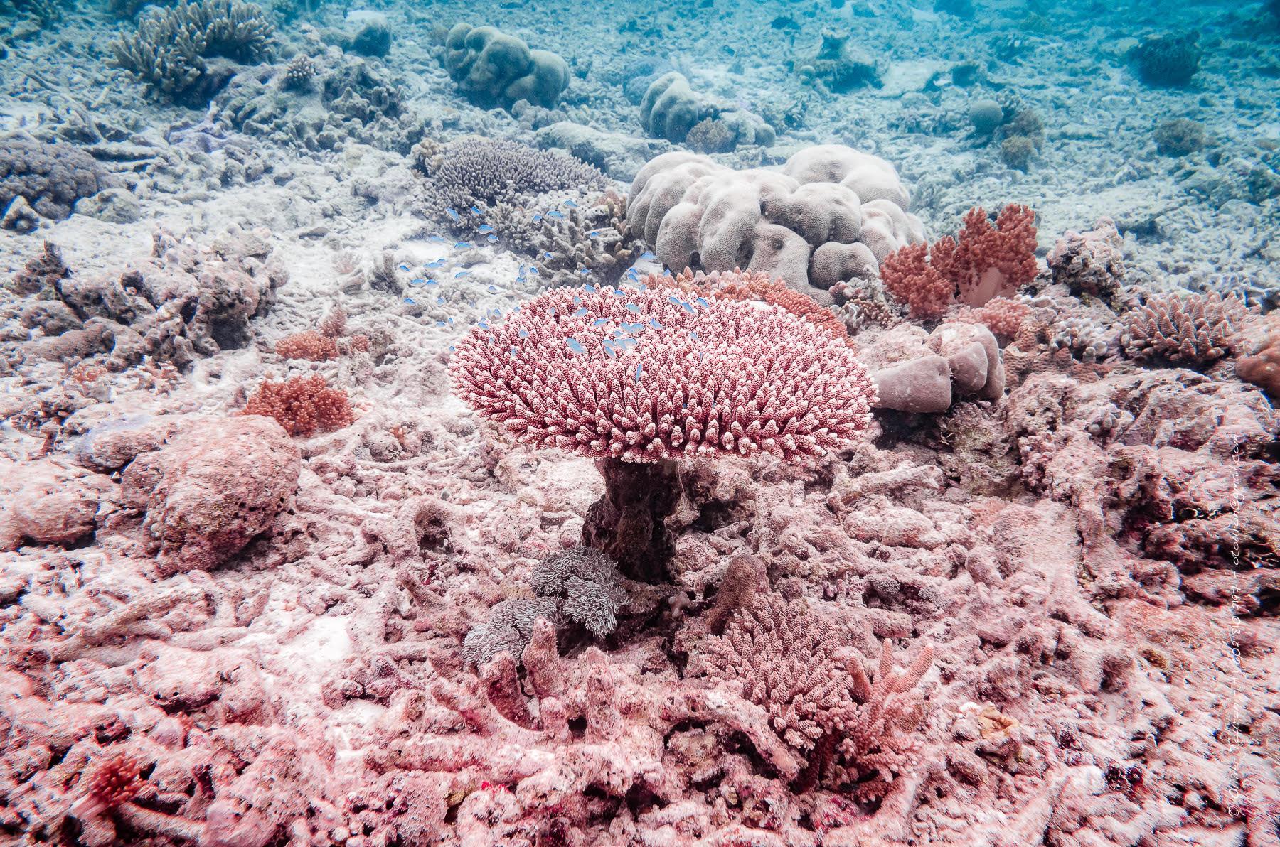 28 novembre 2017. Croisière Ponant-Géo à bord de l'Austral entre Bali et Cairns. En mer. // © Olivier Touron / Divergence