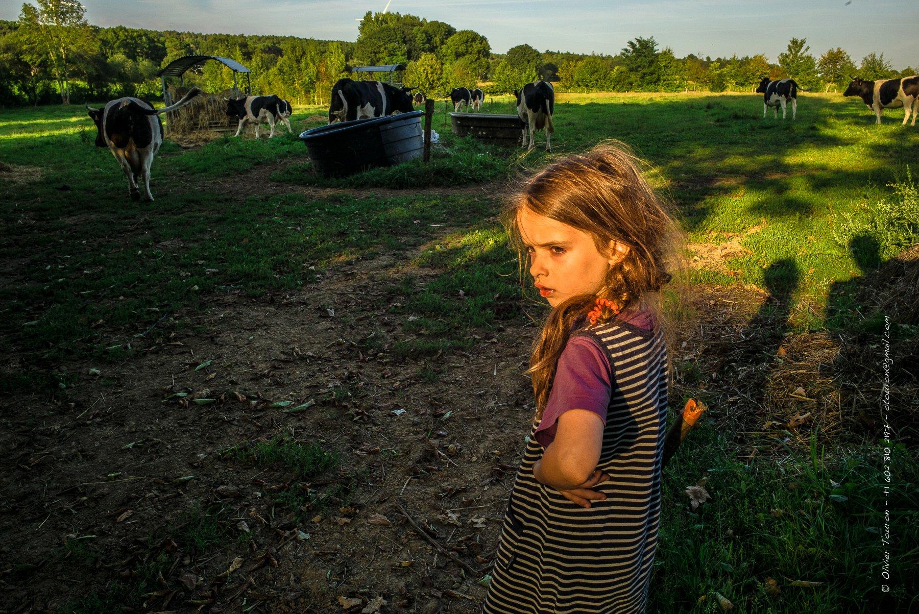03 septembre 2014. Saint-Gondard. Avec la famille Thébault qui a fait le choix d'élever une race locale pour la viande et le lait, la vache bretonne pie noir. // © Olivier Touron / Divergence