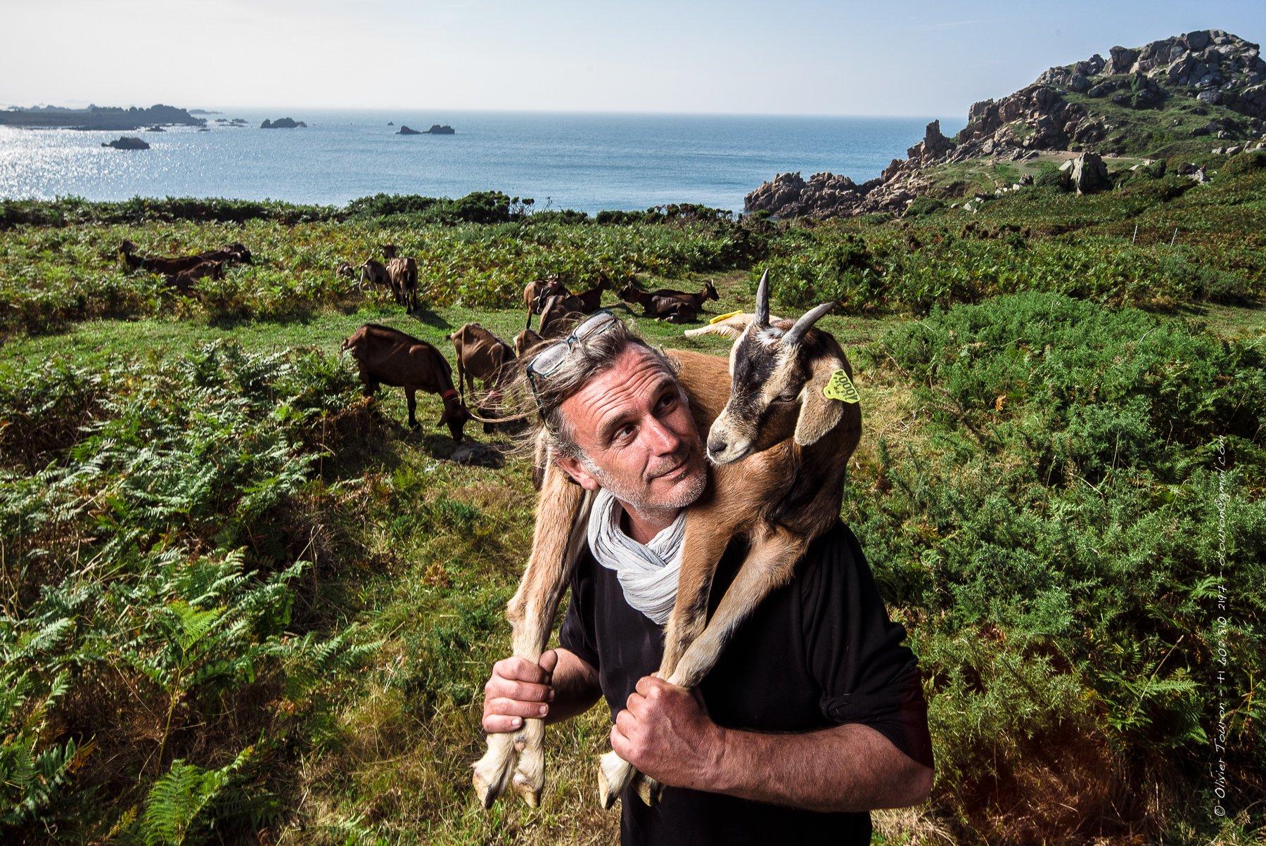 04 septembre 2014. Pointe de Primel. Portrait de Laurent Bonnais et de ses chèvres jardinières. // © Olivier Touron / Divergence